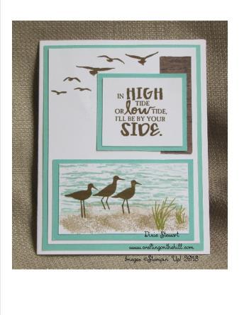 high tide birds