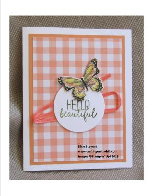 gingham butterfly grapefruit